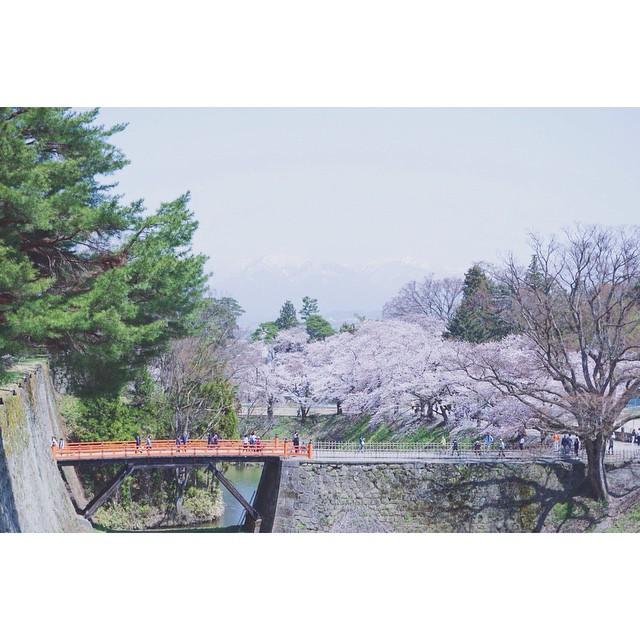 待ってたよ〜桜。