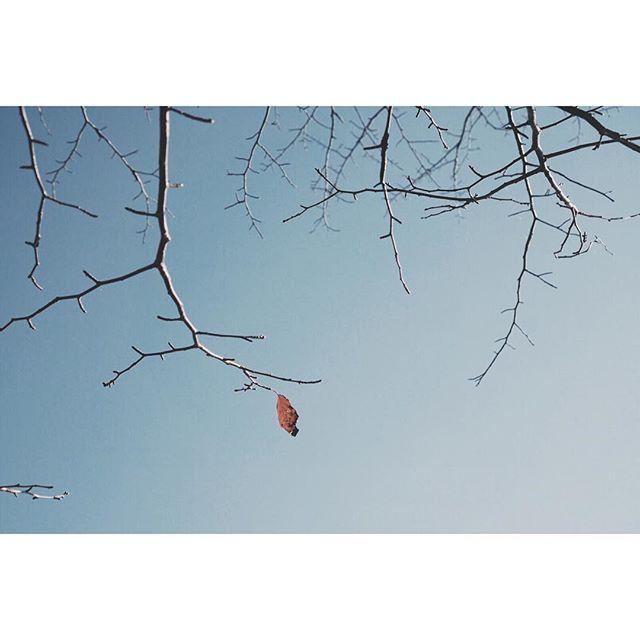 おー フレディ#葉っぱのフレディ #風が変わった #冬の足音 #観音沼 #紅葉狩り #見ごろを過ぎて #南会津 #会津 #福島 #trekking #hiking #nature #forest #outdoor #aizu #fukushima