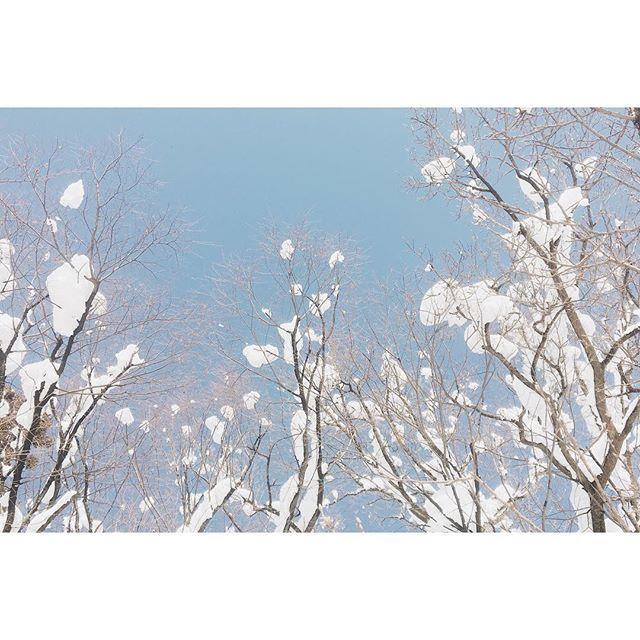 雪の華#散歩 #雪 #空 #会津 #福島 #snow #sky #aizu #fukushima