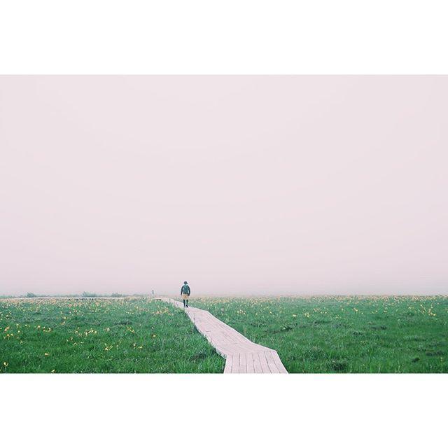 雄国沼 2019.06.29雨と雨の間に#ニッコウキスゲ #雄子沢登山口 #山歩き #雄国山 #磐梯山 #会津 #福島 #trekking #hiking #nature #mountains #forest #outdoor #aizu #fukushima